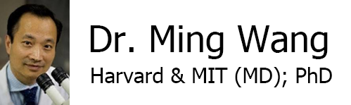 Ming Wang, Harvard & MIT (MD); PhD